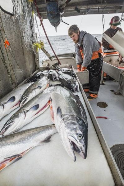 Pesca de Salmão Selvagem Alaska seafood